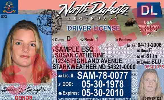 florida drivers licence check